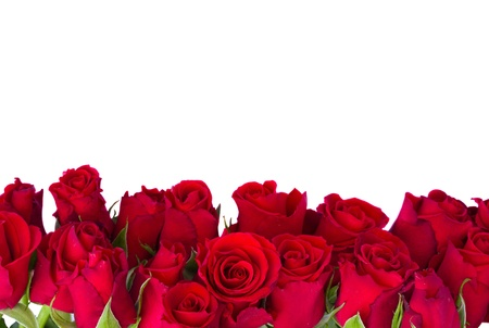 border  of fresh red garden roses  isolated on white background Stock Photo