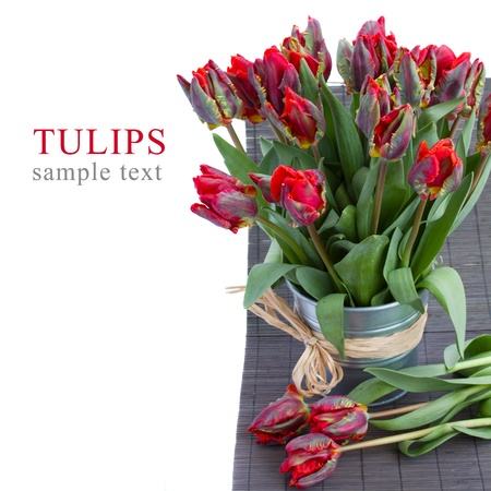 spring parrot tulips in  vase isolated on white background photo