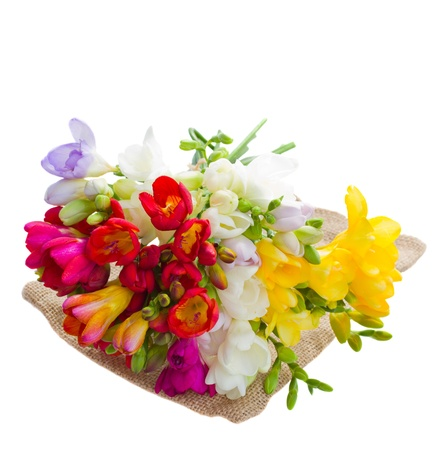 bouquet of freesias flowers isolated on white background photo