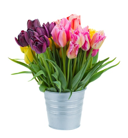 flower vase: pink and violet  tulip flowers in metal pot  isolated on white background
