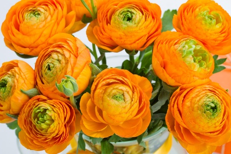 ranunculus orange flowers bouquet  close up Stock Photo - 19668050