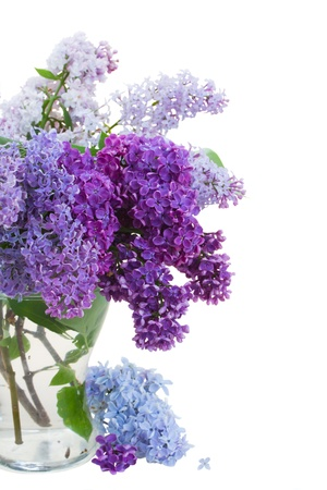 Lilac in vase isolated on white background photo