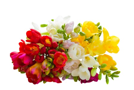 bouquet of multicolored freesias flowers isolated on white background photo