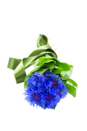 blue corn flowers with green leaves isolated on white background photo
