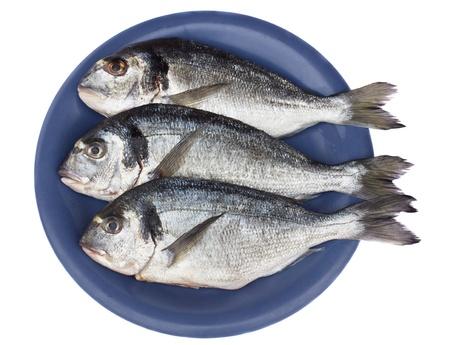 gilt head: gilt head  dorada  on blue  plate isolated on white background Stock Photo