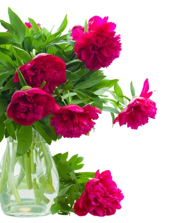 peony flowers in vase isolated on white background photo