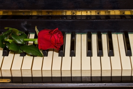 one red rose on vintage piano keyboard photo