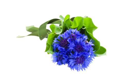 blue corn flowers bouquet with green leaves isolated on white background photo