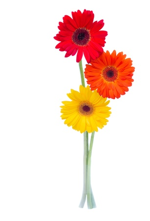 three gerbera flowers isolated on white background Stock Photo