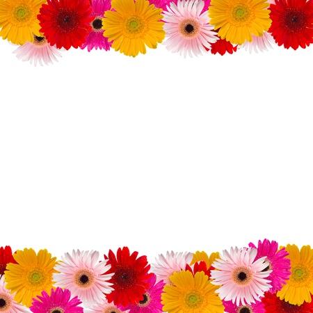 cenefas flores: herbera marco de flores sobre fondo blanco Foto de archivo