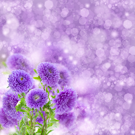 bouquet of fresh violet aster flowers on violet  bokeh  background photo