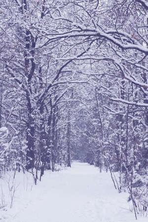 empty path in white  snowed winter forest photo