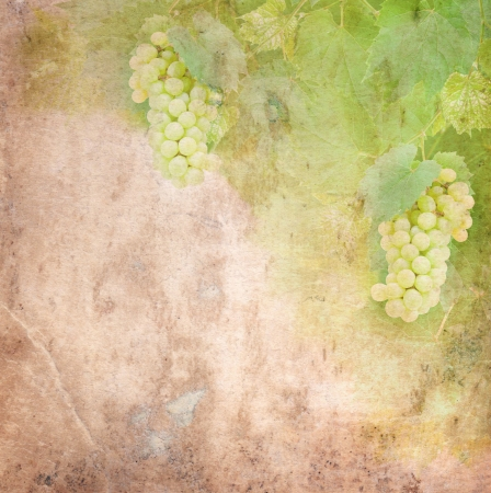Oud papier achtergrond met witte druiven en bladeren
