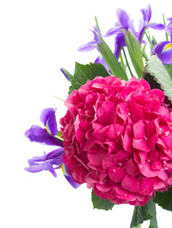 pink hortensia and violet irise  flowers close up  isolated on white  photo