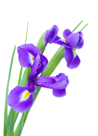irises flower posy  isolated on white  photo