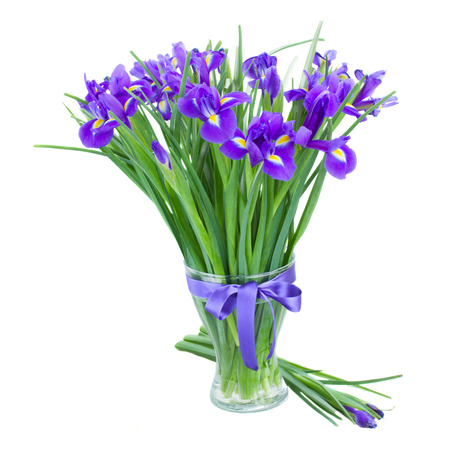 blue  irise flowers in  vase  isolated on white  photo
