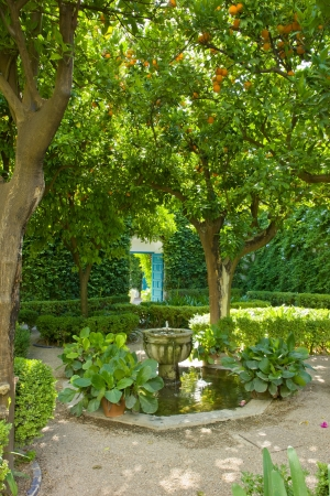 Lemon tree in courtyard (patio) of a typical house in Cordoba,  Spain photo