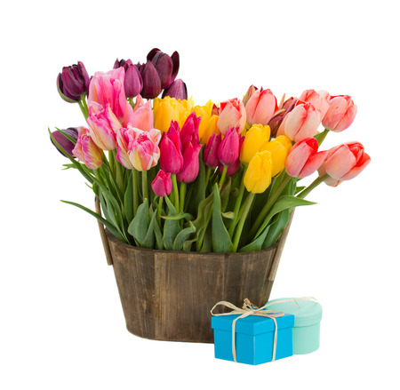 Bunch  of spring  multicolored tulips flowers   isolated on white background photo