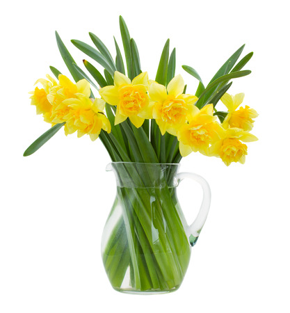 bunch of daffodils in vase isolated on white background