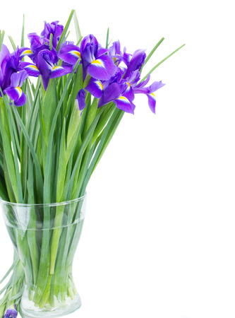 blue  irises flower posy in vase   isolated on white background photo