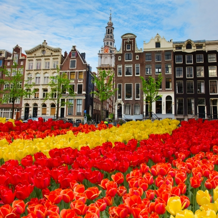 dutch canal house: tulips and  facades  of old houses in Amsterdam, Netherlands