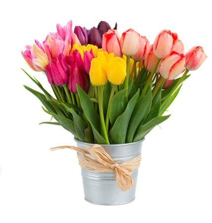 금속 냄비에 봄 튤립 꽃의 무리에 격리 된 화이트