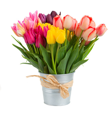 Bunch  of spring  tulips flowers in metal pot   isolated on white Фото со стока