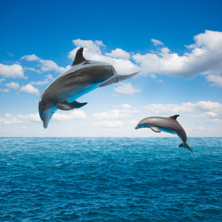 couple of jumping dolphins,beautiful seascape with deep  ocean  waters and cloudscape