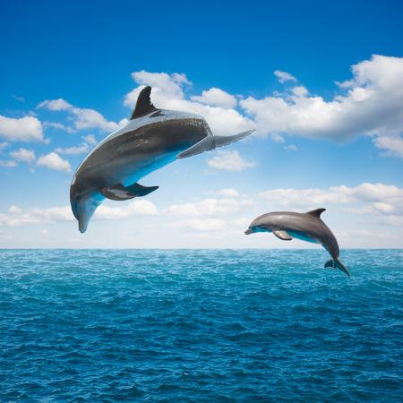 pareja de delfines saltando, hermoso paisaje marino de aguas profundas del océano y celaje