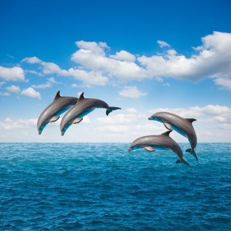 pack of  of jumping dolphins,beautiful seascape with deep  ocean  waters and cloudscape