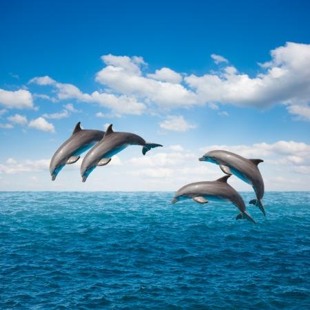 paquete de de delfines saltando, hermoso paisaje marino de aguas profundas del océano y celaje Foto de archivo
