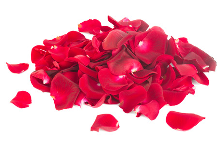 rose petals: pile of crimson red rose petals isolated on white  Stock Photo
