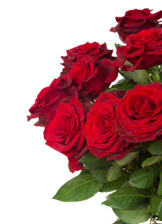 dark red roses  close up  isolated on white  photo