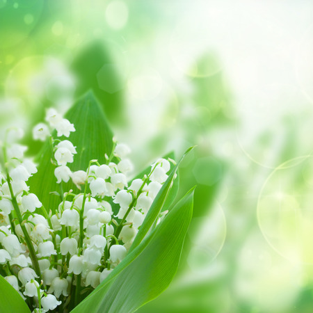 lilly of the valley flowers close up on green bokeh  background