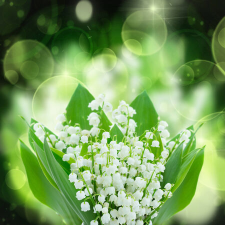 lilly of the valley flowers close up on green and black  bokeh  background photo