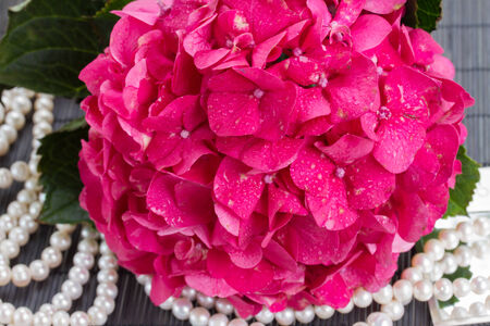 pink hortensia flowers close up  and pearls photo