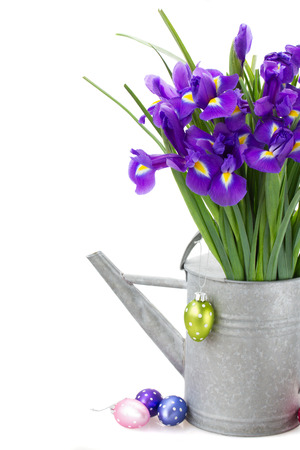 bunch of blue  irise flowers in watering can   with easter eggs  isolated on white background Stock Photo - 25973996