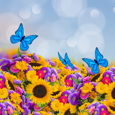 flowers garden with sunflowers, asters and butterflies photo