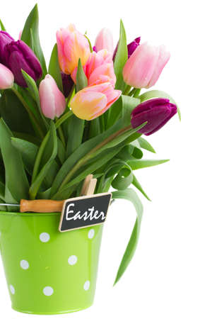 pot of spring tulips  isolated on white background