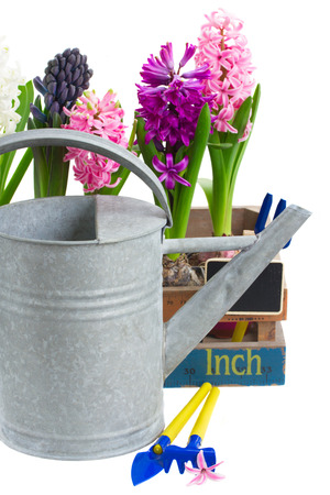Watering can with hyacinth isolated on white background photo