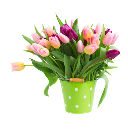 pink  and violet tulips  in pot   isolated on white background photo