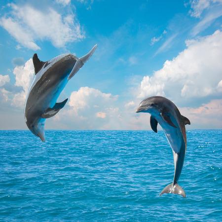 Dos delfines saltando, hermoso paisaje marino de aguas profundas del océano y celaje Foto de archivo - 26332709