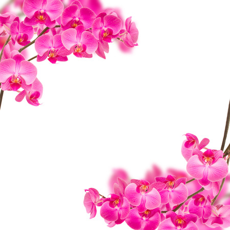 flower border pink: frame of violet orchids on branch isolated on white background Stock Photo