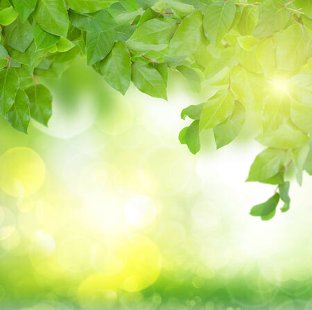 spring green leaves in garden  background with sun beams photo
