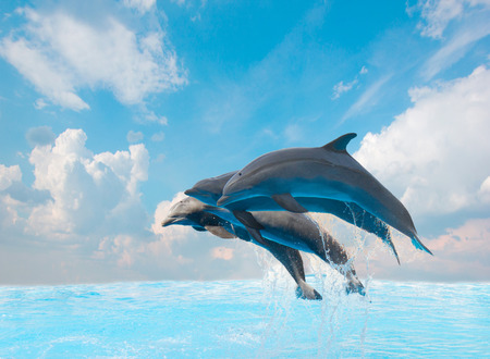 group of jumping dolphins,beautiful seascape with deep  ocean  waters and cloudscape Stock Photo