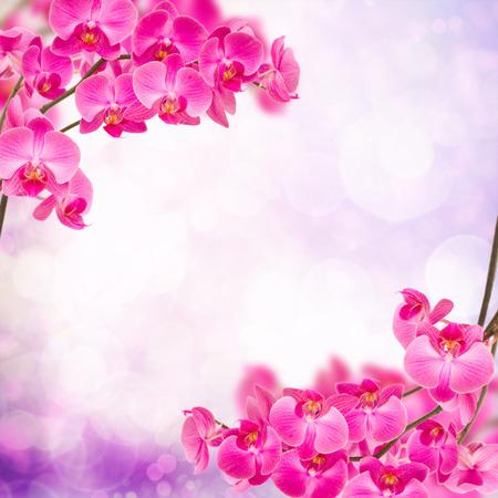 purple  orchid branch  frame on light bokeh background