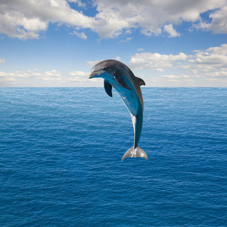 single jumping dolphin, beautiful seascape with deep  ocean  waters and cloudscape photo