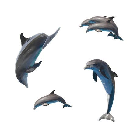 conjunto de delfines saltando aislados sobre fondo blanco
