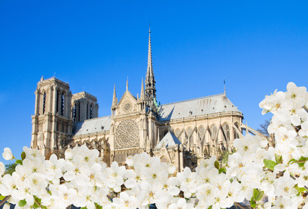 Notre Dame  cathedral church at spring , side view, Paris, France photo