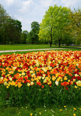 spring landscape of Saski park in Warsaw, Poland photo